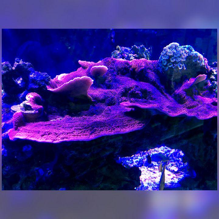 Magnificent Mushroom Coral - Fish Dont Talk
