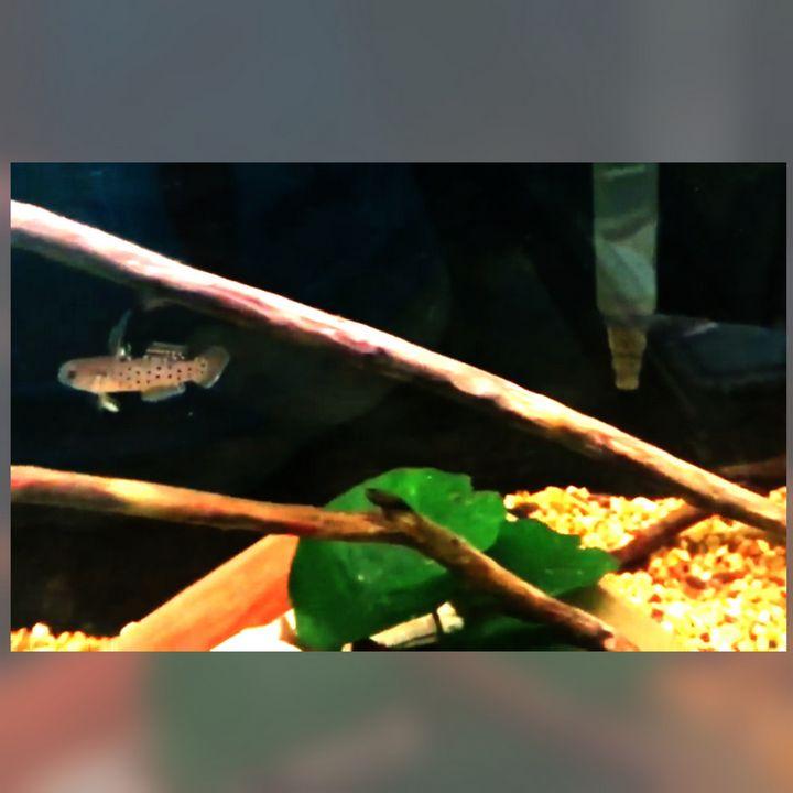 Drift Wood and Plants - Fish Dont Talk