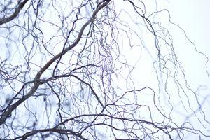 Viral Tree