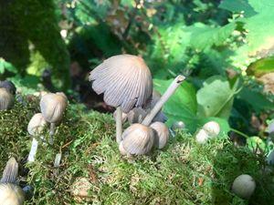Fungal Form 1