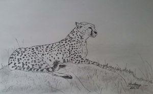 A resting Cheetah