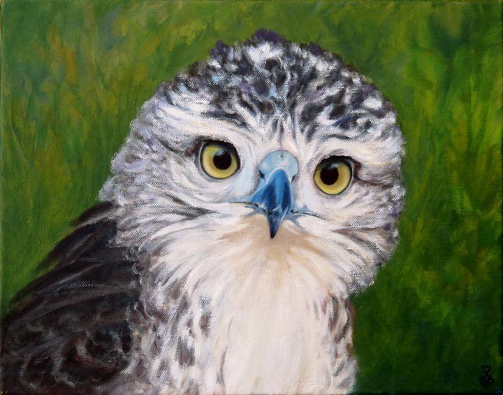 Hawk Eye - Vicki Van Vynckt