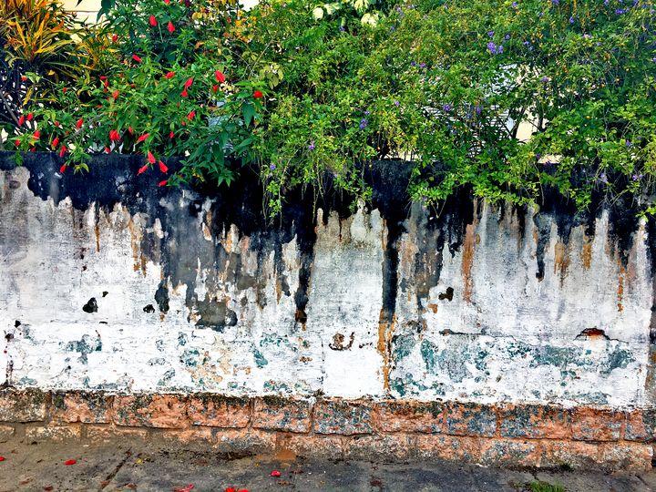 Florianópolis-168 - djronce