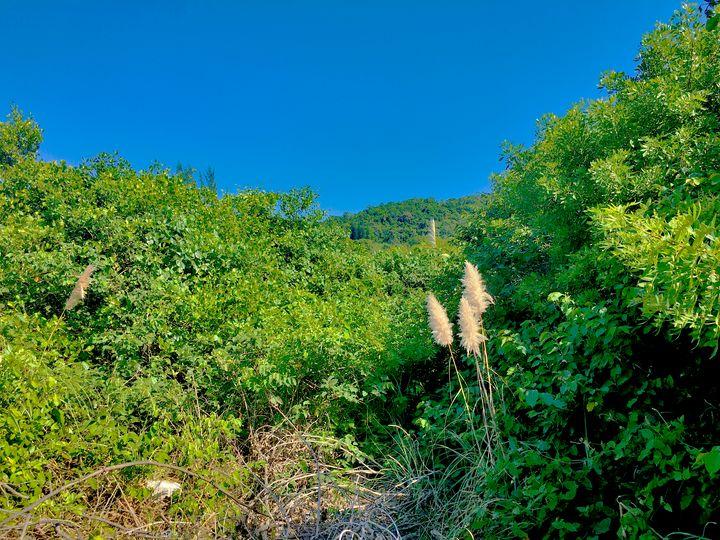 Florianópolis-354 - djronce