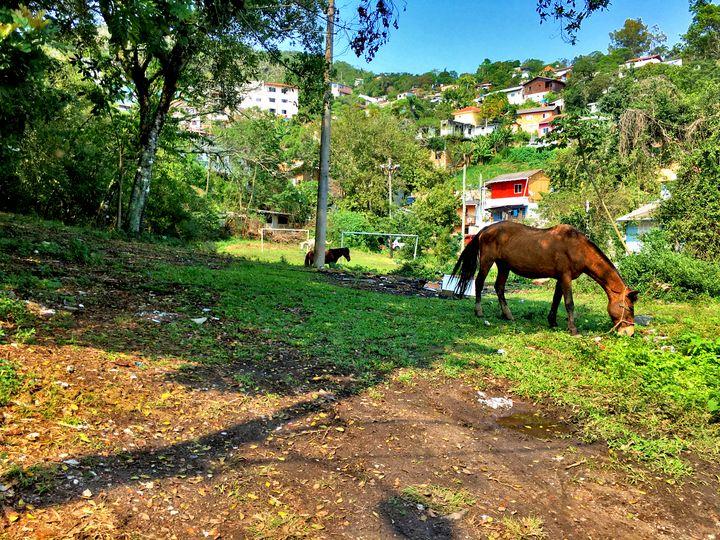 Florianópolis-482 - djronce