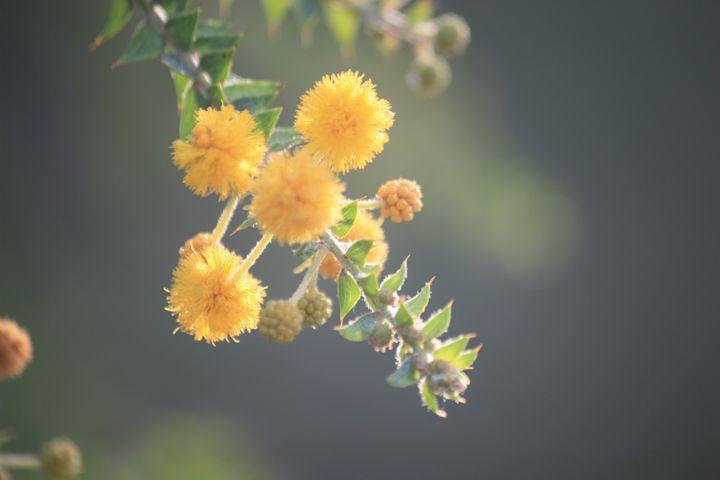 flower - ABC