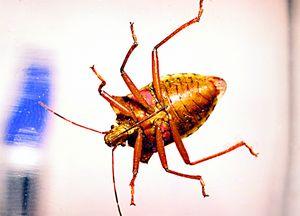 a curious cockroach
