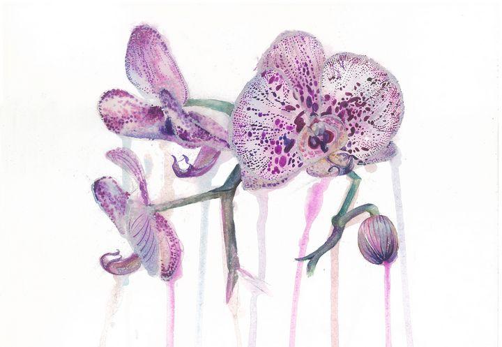 Orchid - Artsylina
