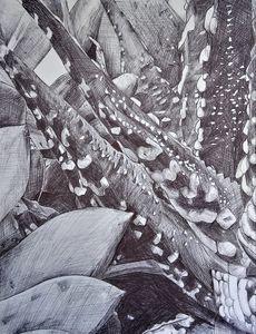 Pen Drawing of Cactus