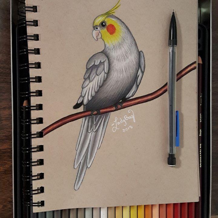 Cockatiel - Ladybug Delatorre
