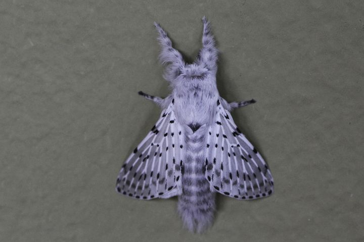 White Moth on a Wall - Kael Hopenwasser Photography