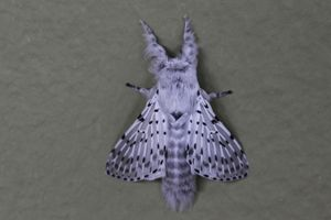 White Moth on a Wall