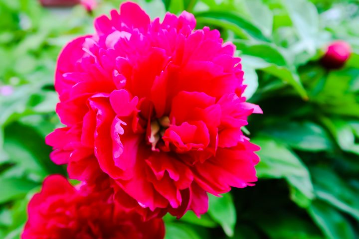 Fuchsia Flower - Crimson & Teal Creations