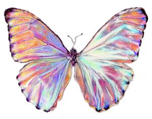 Shiny Pink Butterfly Drawing
