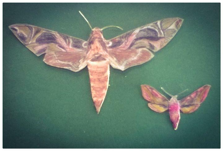 leopard moths - alex martin artworks