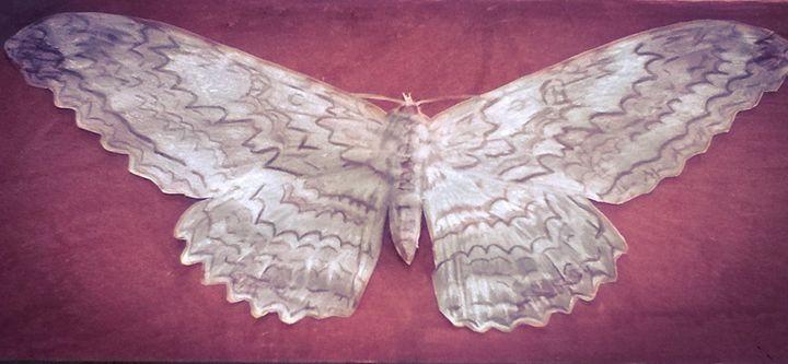 floral shift moth - alex martin artworks