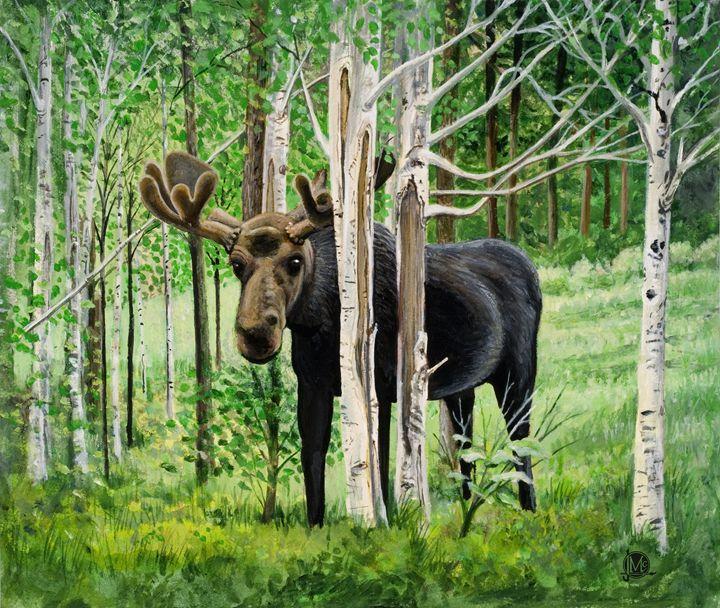 Moose in Grand Lake - JmacArtStudio