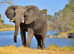 The magnificent elephant. - Animals Love And Respect