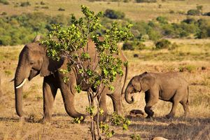 Elephant - Animals Love And Respect