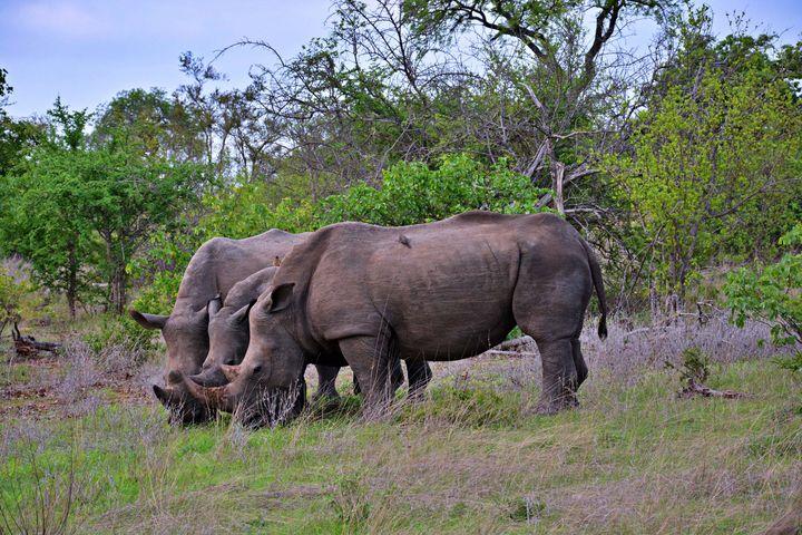 Rhinos - Animals Love And Respect