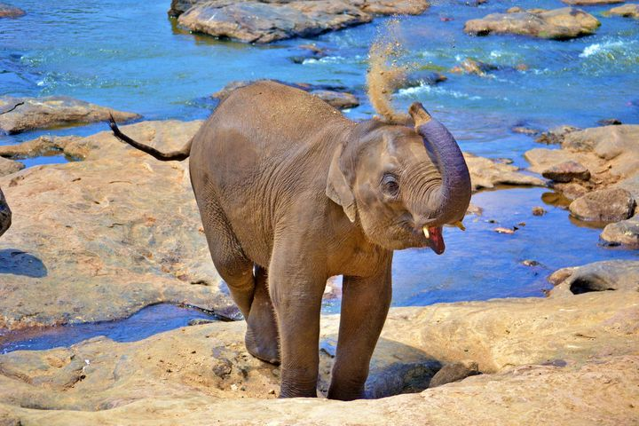 Beautiful Baby Elephant - Animals Love And Respect