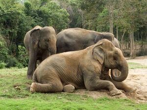 Beautiful Elephants - Animals Love And Respect