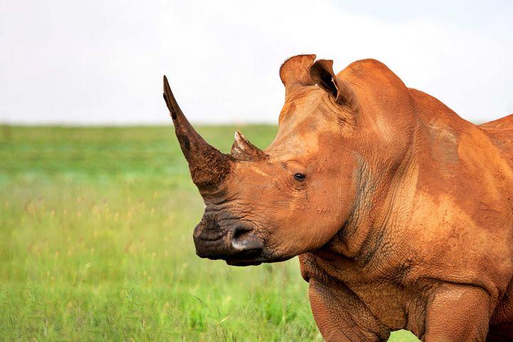 Rhino's the true unicorns. - Animals Love And Respect