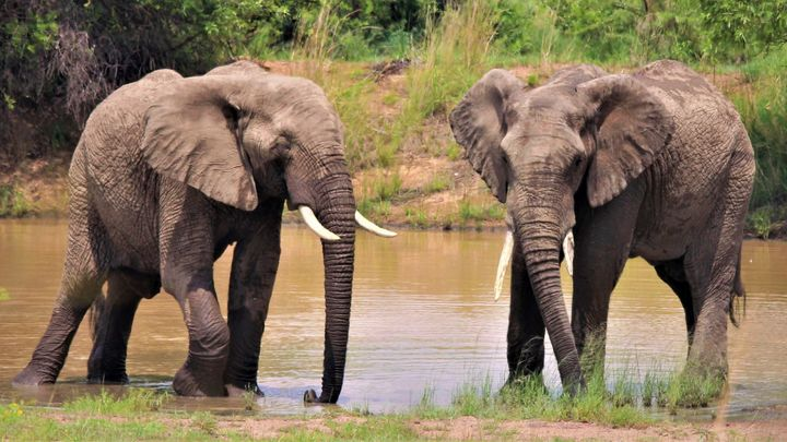 Elephant At The Waterhole - Animals Love And Respect