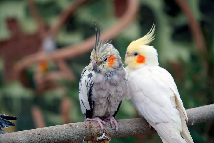 Beautiful Birds - Animals Love And Respect