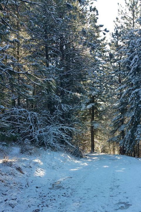 Winterful the photo - MyArt: Brenda Knoll