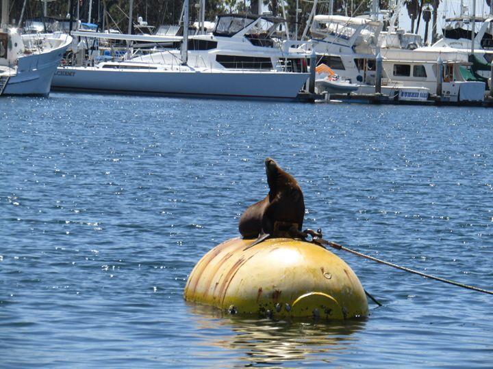 Seal - xshop