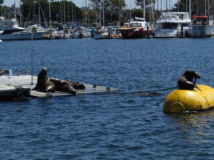 Seals - xshop