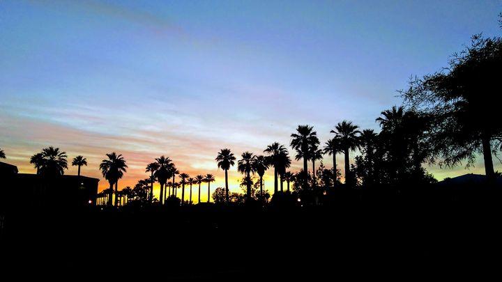 Palm Trees - xshop