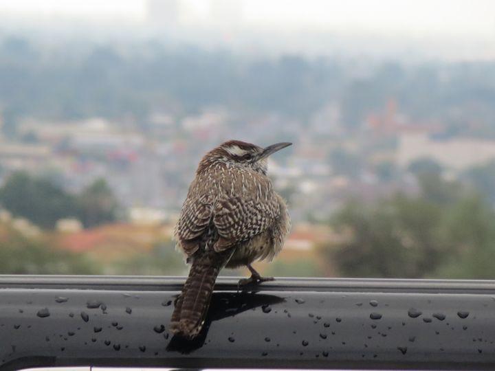Sparrow - Zarx