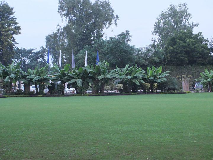 Banana Trees - Yogesh Sakhuja