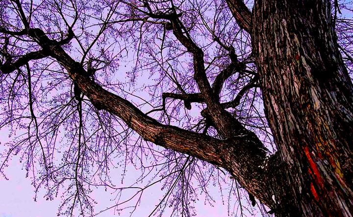 Looking Up - Cass