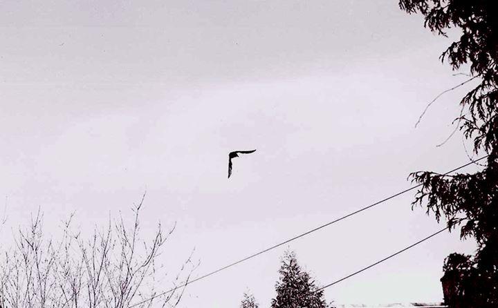 Flight - Cass