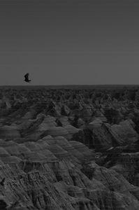 Bird Over Badlands