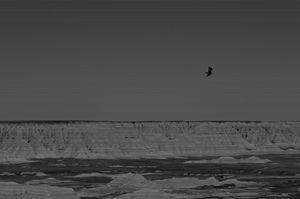 Soaring Over Desolation