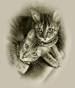 Bengal Cat Couple in Pencil
