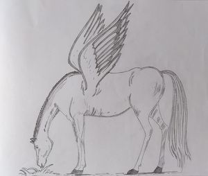 horse with wings