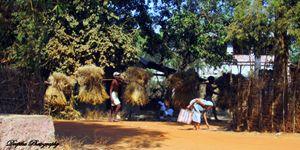 Indian Village life - live.love.laugh
