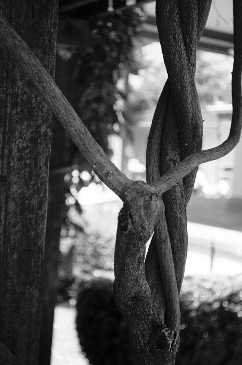 Tree Knot - Jodie Herpel