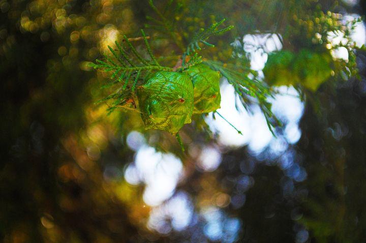 Budding Tree - Jodie Herpel