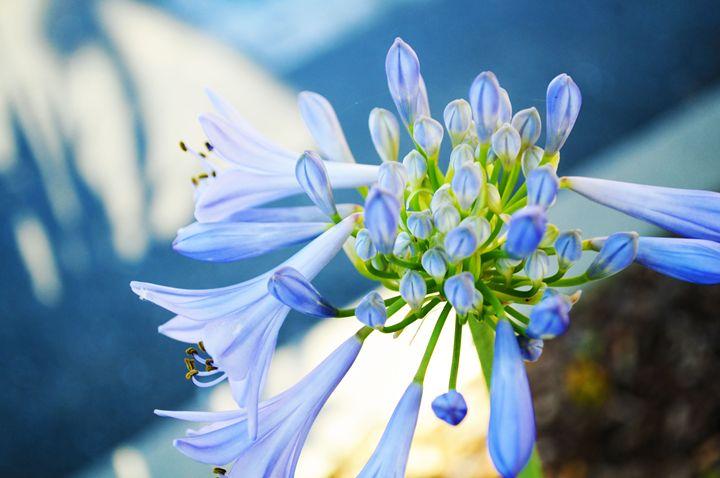 Blue Bell - Jodie Herpel