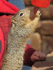 Playful Squirrel - Jodie Herpel