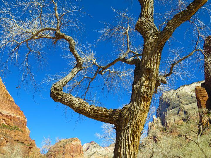 Ole Tree in Zion - Jodie Herpel