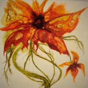 The Orange Daisy
