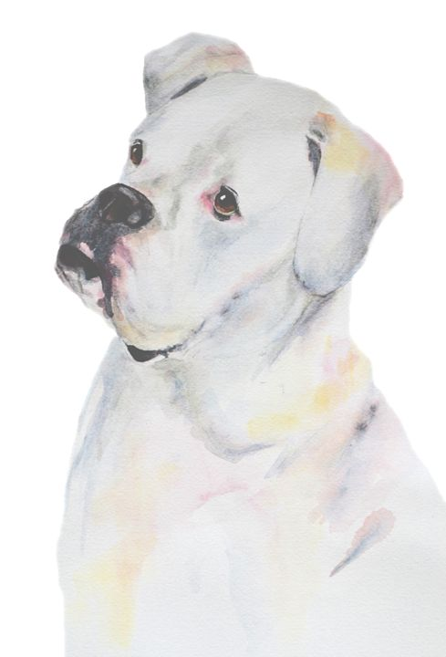 White Boxer - Watercolors by Susi