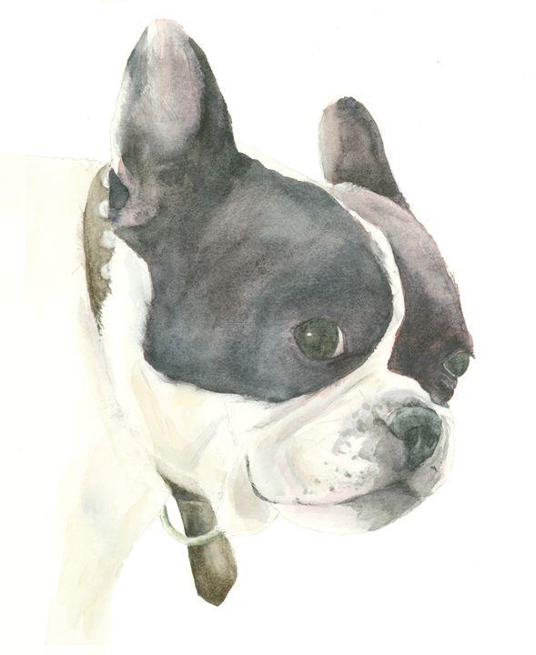 Boston Terrier - Watercolors by Susi